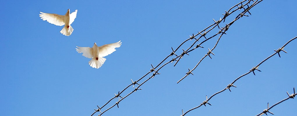 Doves flying across barbed wire