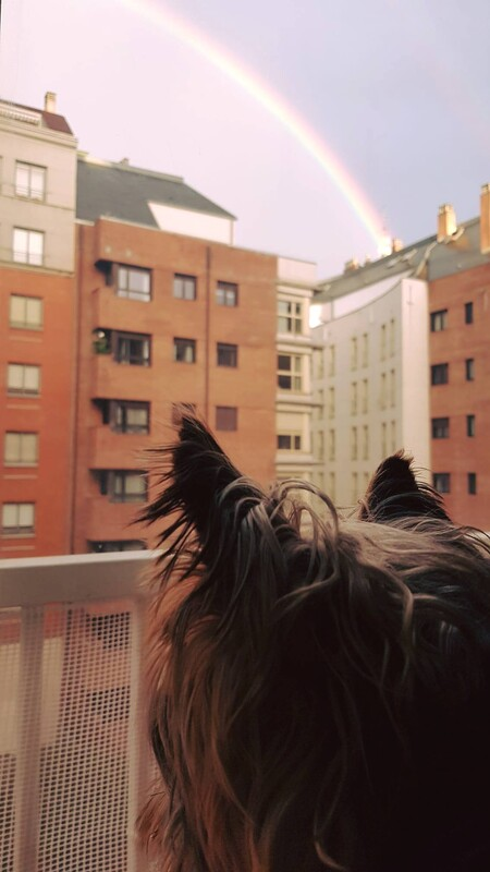 Dog looking at raibow over builldings